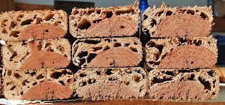termites3